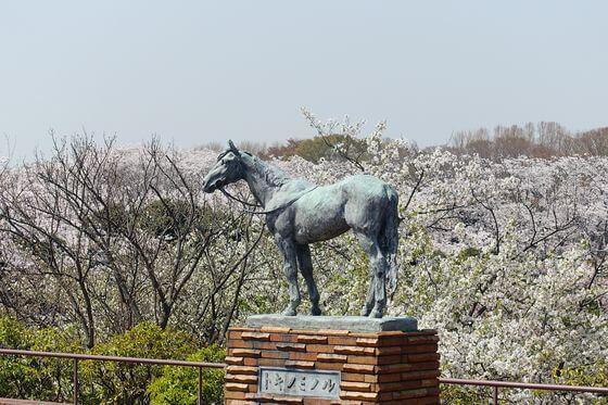 横浜 根岸森林公園 桜