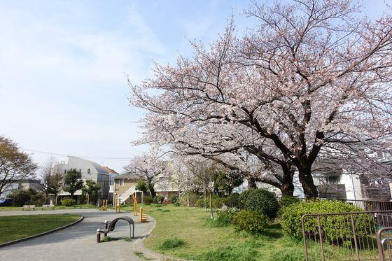 野毛山公園 遊具広場 桜