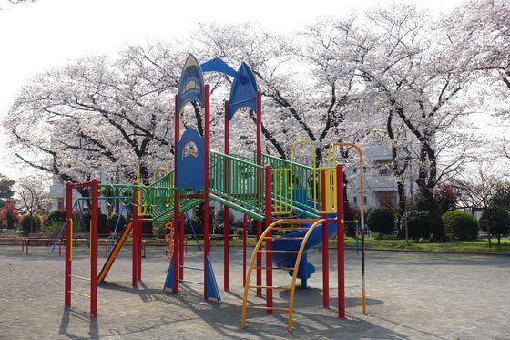 野毛山公園 展望地区 桜