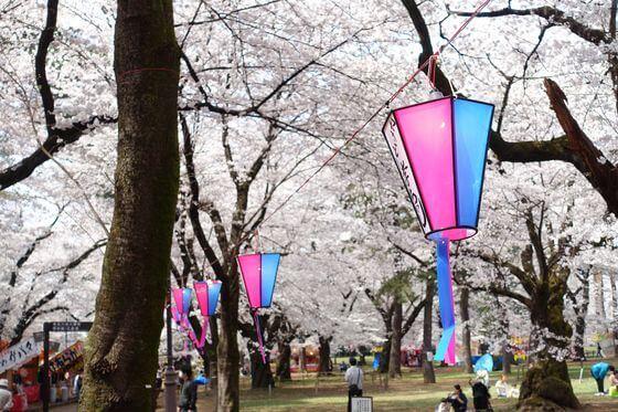 大宮公園 桜 ライトアップ