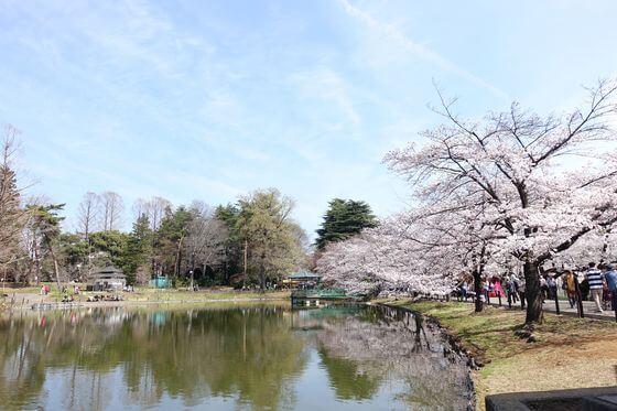 大宮公園 桜 見頃