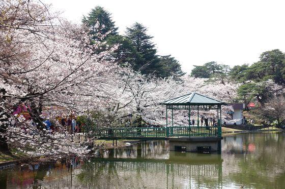 大宮公園 白鳥池