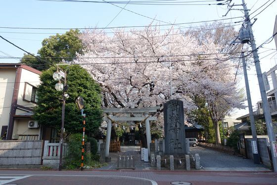 大田区 御嶽神社 桜