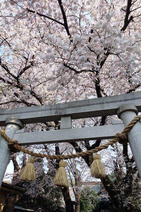 御嶽神社 大田区 桜