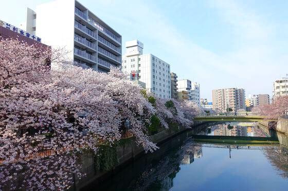 大岡川 桜 クルージング
