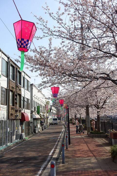 大岡川 桜 ライトアップ