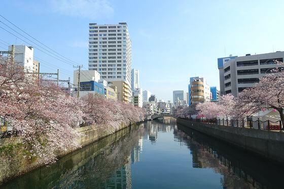 大岡川 お花見