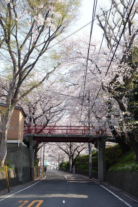 桜坂 大田区