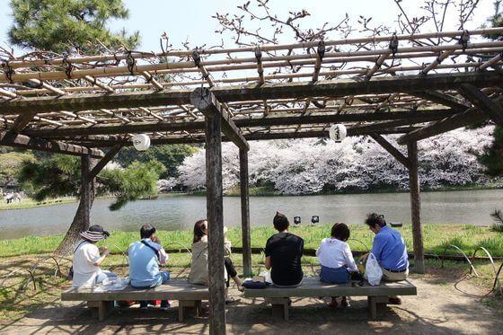 横浜 三渓園 桜