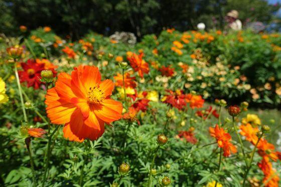 里山ガーデン 開花状況