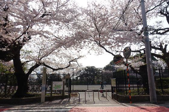 多摩川駅 桜