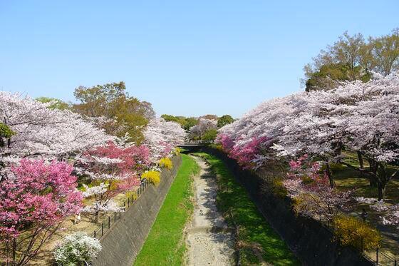 国営昭和記念公園 旧桜の園