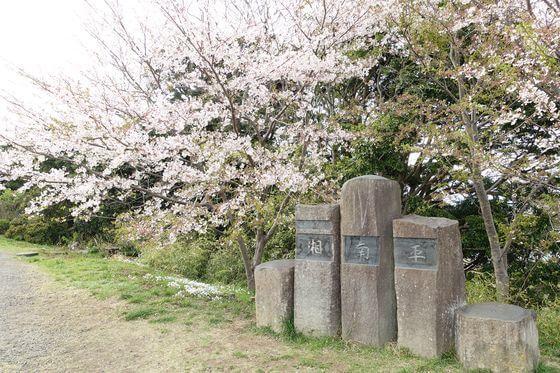 平塚 高麗山公園 桜