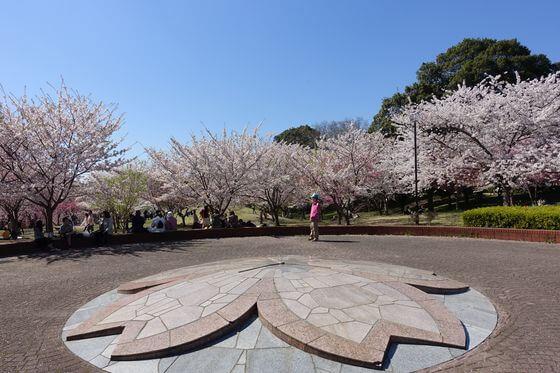 北本 高尾さくら公園 桜