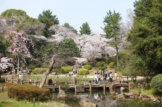 中野 哲学堂公園 桜
