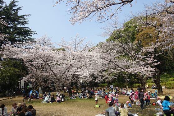 哲学堂桜まつり