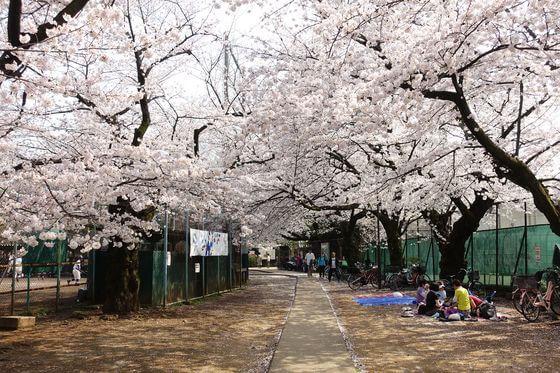中野区 桜