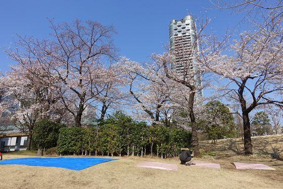 檜町公園 桜