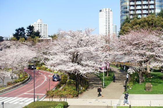 東京ミッドタウン 桜
