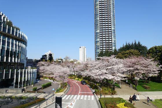 ミッドタウン 桜祭り