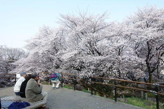 戸山公園 桜