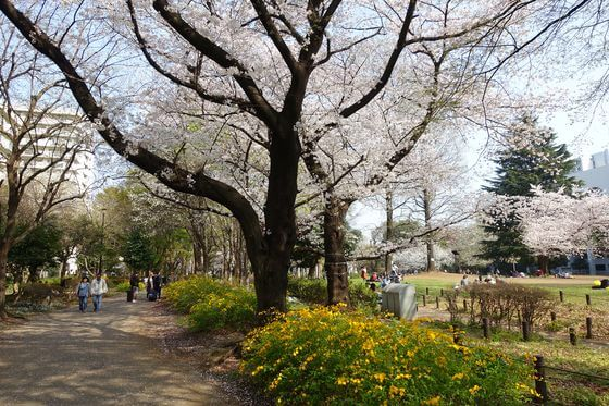 戸山公園 大久保地区 花見