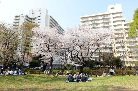 戸山公園 大久保地区 桜