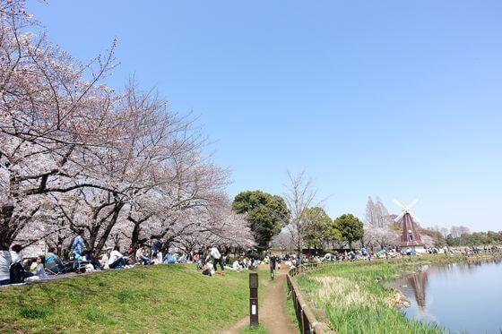 浮間公園 桜情報