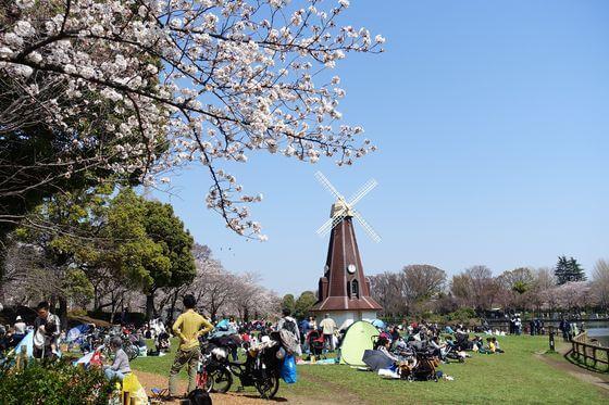 桜 浮間公園