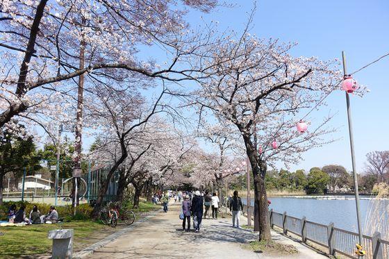 浮間公園 桜 見頃