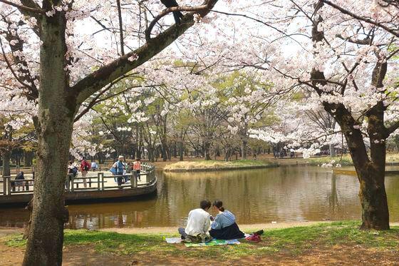 お花見デート おすすめ 東京