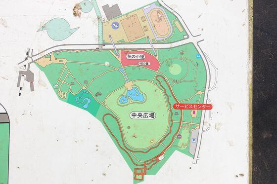 代々木公園 花見 場所