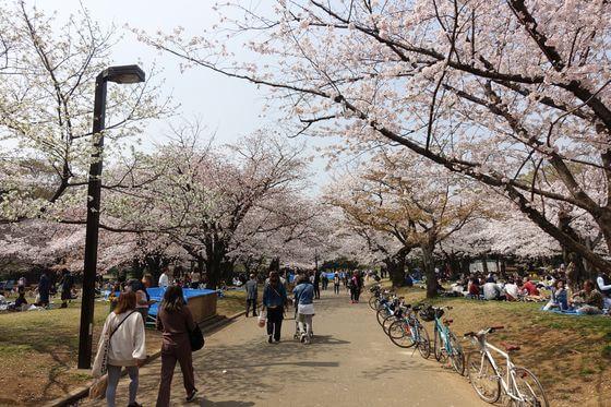 代々木公園 桜の園