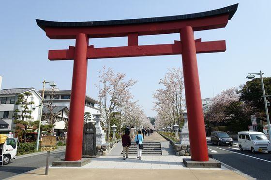 鶴岡八幡宮 参道 桜