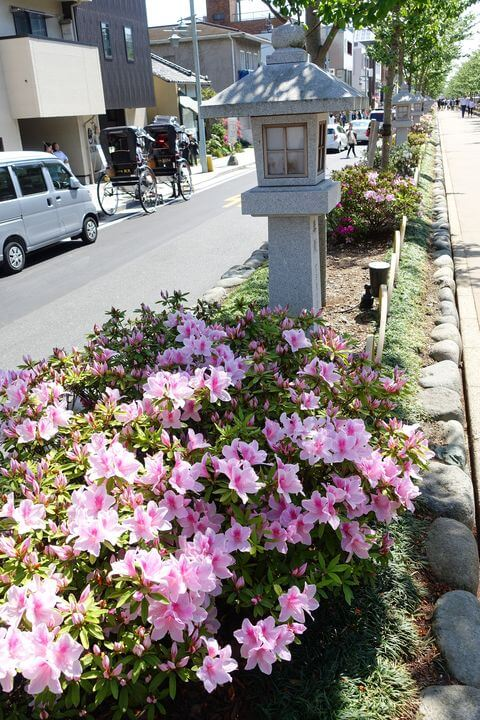 鶴岡八幡宮 参道 ツツジ