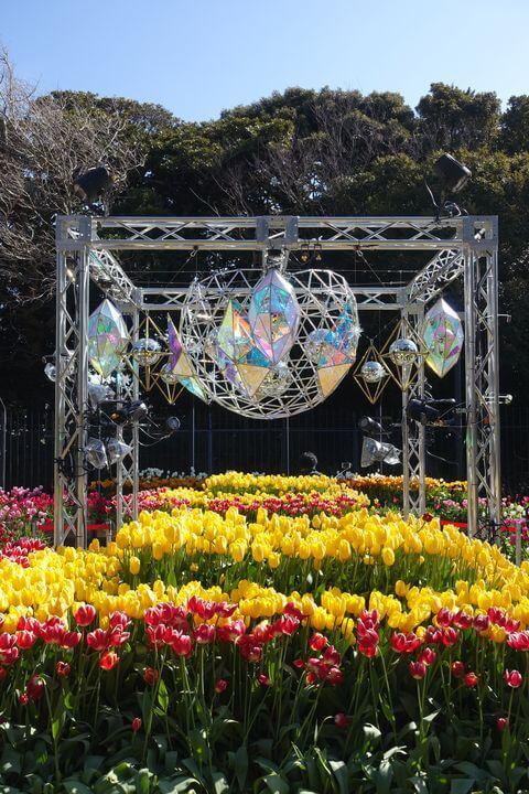 湘南の宝石 チューリップ