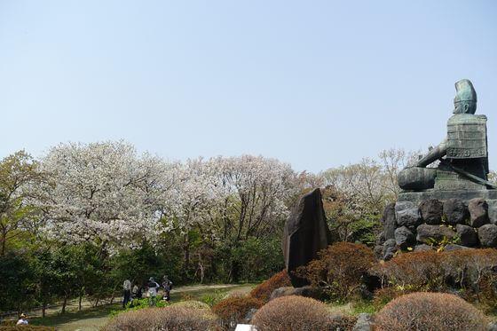 源氏山公園 桜 見頃