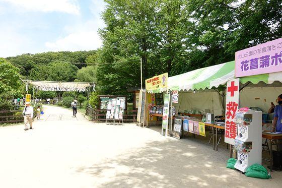 北山公園 菖蒲苑