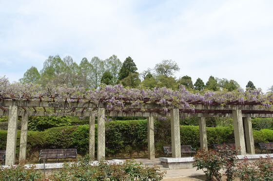 神代植物公園 藤 場所