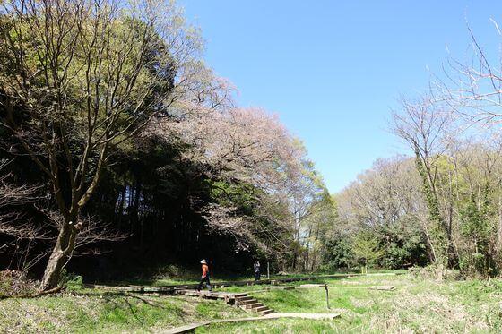 北本自然観察公園 エドヒガンザクラ