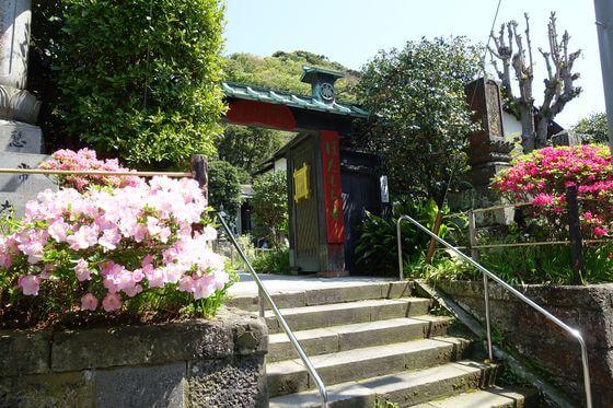 鎌倉 常栄寺 ツツジ