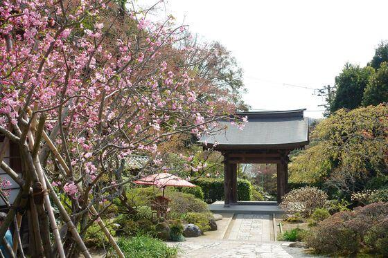 鎌倉 海蔵寺 カイドウ