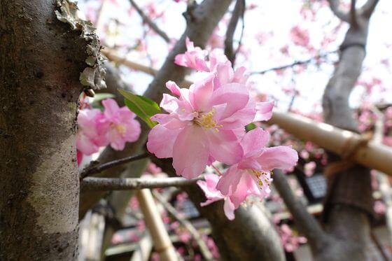 海蔵寺 鎌倉 カイドウ
