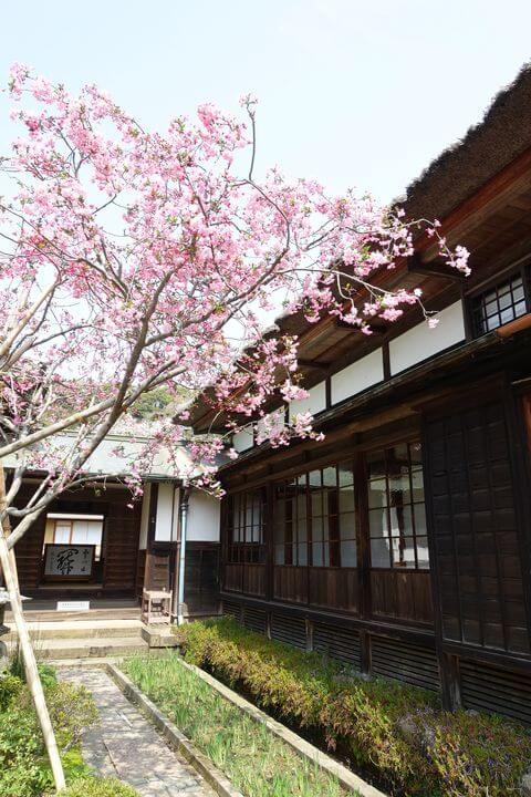 鎌倉 海蔵寺 海棠