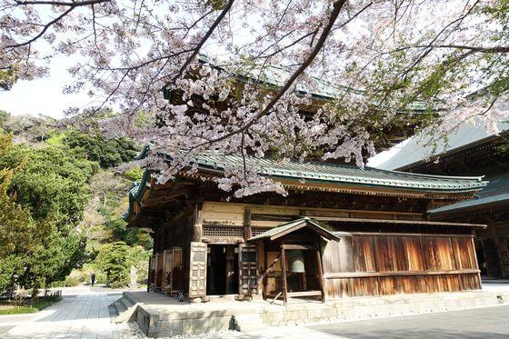 建長寺 仏殿 桜
