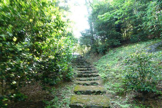 小室山公園 つばき園