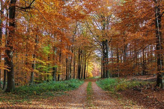 紅葉する木としない木 違い
