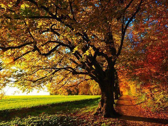 紅葉する木としない木