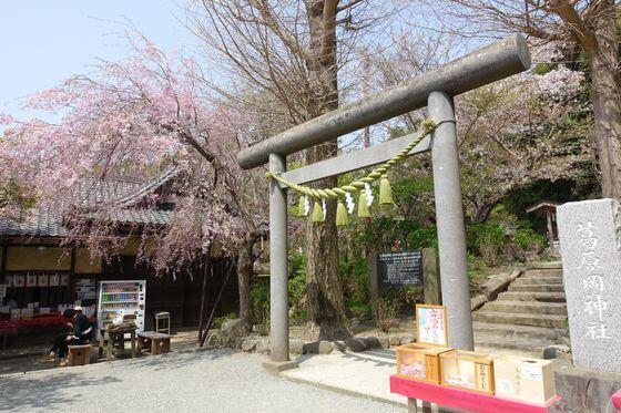 葛原岡神社 鎌倉 桜