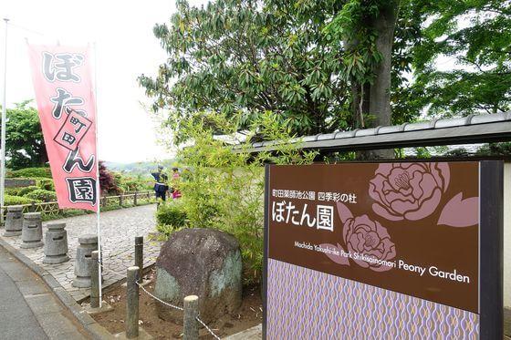 町田市 ぼたん園